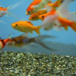 【マツコの知らない世界】水中で金魚の写真が撮れる潜水艦型おもちゃ!「サブマリナーカメラ」が凄い!