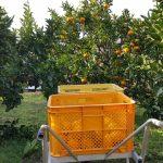 谷井農園(谷井康人)が凄い!!ジュース・果物の購入方法・通販を調査